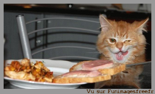 chat chatte cat amusant funny drole farceur etonnant insolite costume rire  funimages blog image insolite